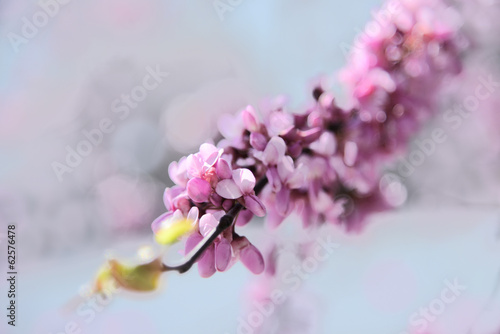 Blooming tree in the springtime