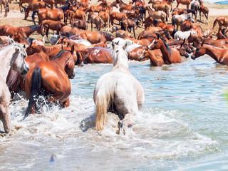 arabian herd in the lake. sunny day