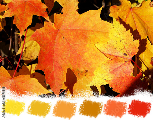 Red and orange maple leaves color palette