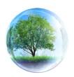 tree in glass bubble