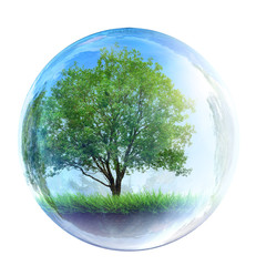 tree in glass bubble
