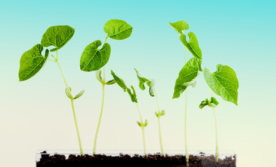 green plants grow