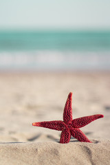 Red starfish on the beach, Vertical