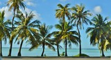 Palm Trees and the Beach - Fine Art prints