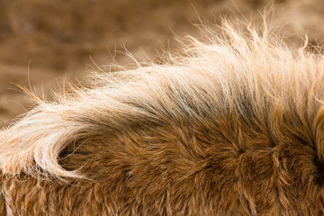 Close-Up of the neck of a Horse