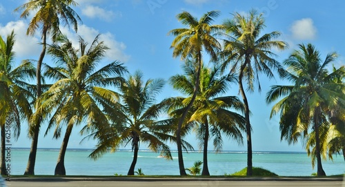 Keuken foto achterwand Palm boom Palm Trees and the Beach