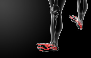3d render x-ray of foot - top view