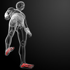 3d render x-ray of foot - bottom view