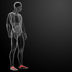 3d render x-ray of foot - side view