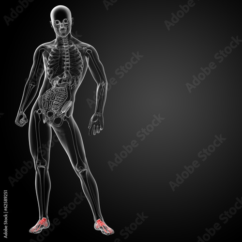 3d render x-ray of foot - front