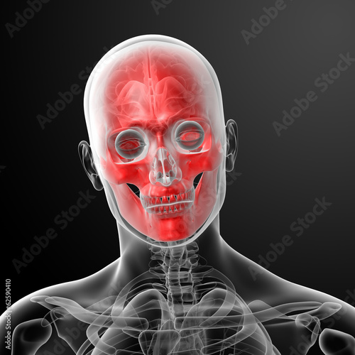 3d render human skull anatomy - close up