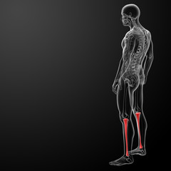 3d render human tibia - side view