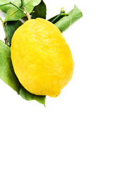 Lemon with green leaves isolated on white background close up. L