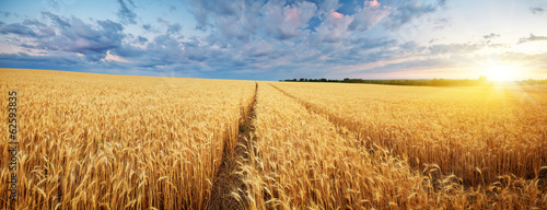 Staande foto Weide, Moeras Meadow of wheat.