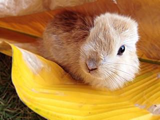 rabbit hiding in yellow leaves