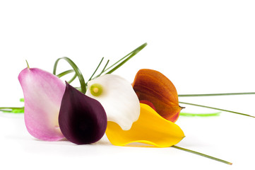 Five beautiful calla flowers