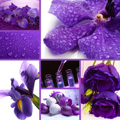 Collage of photos in purple colors
