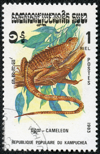 stamp printed by Kampuchea shows Chameleon