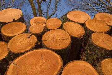 Baumstapel von unten
