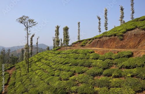 wayanad tea country