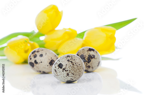 quail eggs with tulips, on a white background