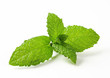 Fresh mint leaves - 62613015