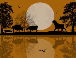 Bulls silhouette near water