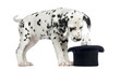 Dalmatian puppy looking at a rabbit in black top hat