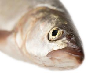 fish head. macro