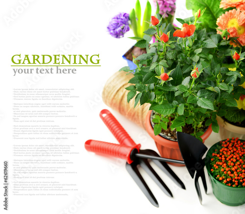 potted flowers and garden tools on a white background