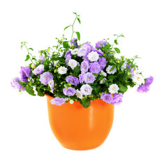 potted flowers
