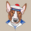 vector funny cartoon hipster dog Bullterrier sailor