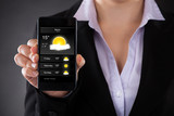 Businessperson Showing Weather Forecast On Mobile Phone