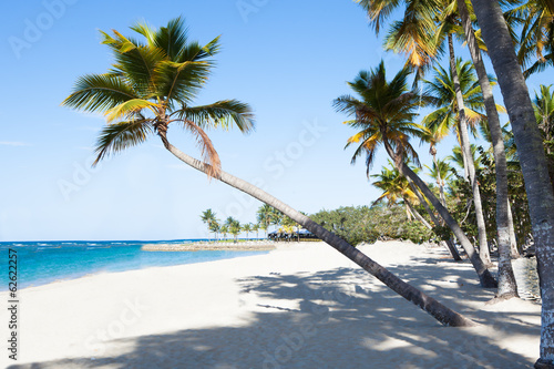 Palm Trees At Peaceful Beach