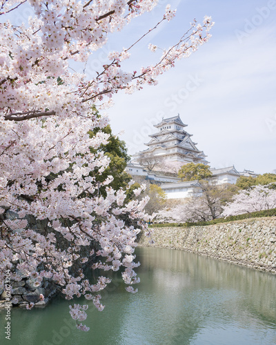 Cherry blossoms and castle in spring, Japan