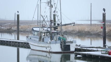 Steveston Snow, Fishboat and Herons