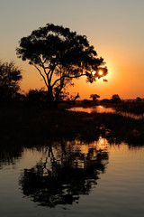 Tree and reflection at sunset, Kwando river