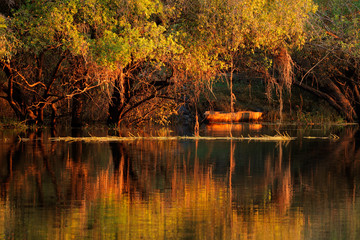 Trees and reflection, Zambezi river
