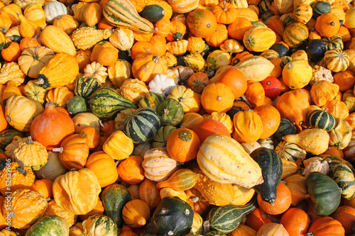 Fresh gourds, squashes, and Pumpkins