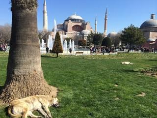 Meydanda Köpek