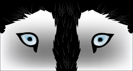 Husky dog - vector illustration
