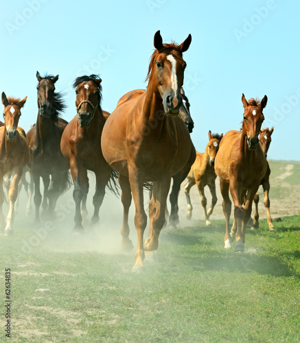 Horses on the farm in summer