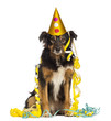 Front view of a Border collie partying, sitting