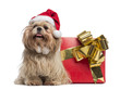 Shih tzu with christmas hat, sitting next to a present box