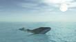 baleine dans l'eau propre