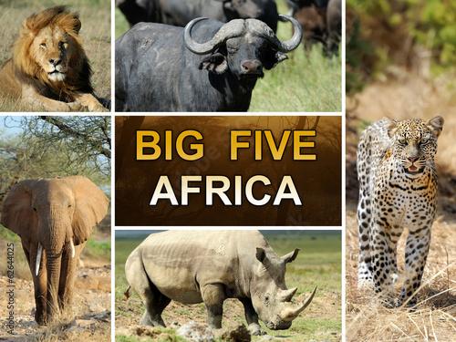 Keuken foto achterwand Leeuw The Big Five