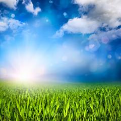 Gras, Sonne, Wolken und Lichteffekte