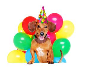 dachshund dog    holding the blank board