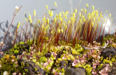 Jardin microscopique sur un bonsaï