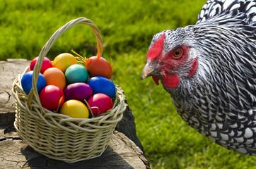 Huhn und Osterkorb mit bunten Ostereiern